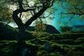 Картинка деревья, солнце, фото, природа, склон, небо, гора