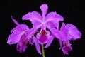 Картинка природа, экзотика, орхидея, лепестки, растение