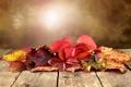 Картинка осень, листья, стол, боке