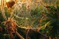Картинка листья, макро, растения, Паутина