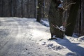 Картинка зима, дорога, дерево
