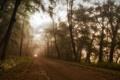 Картинка природа, лес, пейзаж, дорога, туман