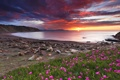 Картинка небо, облака, закат, цветы, горы, тучи, озеро