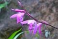 Картинка цветы, растение, ветка, лепестки