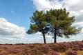 Картинка поле, лето, деревья, пейзаж, природа