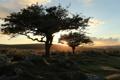 Картинка trees, landscape, nature, sunset, dartmoor