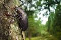 Картинка макро, дерево, жук, ствол, кора, усатый