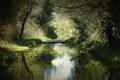 Картинка лес, река, заросли