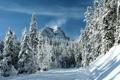 Картинка зима, лес, снег, деревья, гора