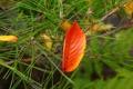 Картинка осень, иголки, желтый, лист, хвоя
