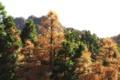 Картинка осень, лес, деревья, арт, крона