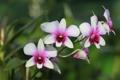 Картинка природа, лепестки, стебель, орхидея