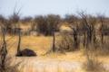 Картинка природа, Африка, страусы