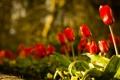 Картинка свет, цветы, природа