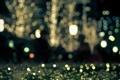 Картинка свет, цветы, ночь, блики