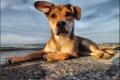 Картинка море, друг, солёный пёс