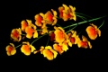 Картинка природа, цветок, соцветие, растение, фон