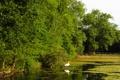 Картинка деревья, природа, пруд, парк, фото, Англия, Лондон