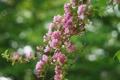Картинка блики, дерево, ветка, размытость, цветение