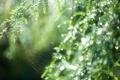 Картинка природа, лес, паутина, макро, роса