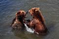 Картинка игра, медведь, купание, пара, водоём
