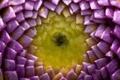 Картинка цветок, цвета, сердцевина