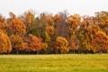 Картинка осень, листья, деревья, парк, landscape, nature, park