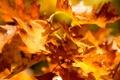 Картинка осень, листья, деревья, ветки, природа, желтые