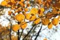 Картинка осень, листья, макро, жёлтое