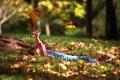 Картинка осень, листья, девочка