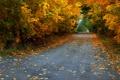 Картинка дорога, осень, листья, деревья, листва
