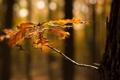 Картинка осень, листья, макро, природа