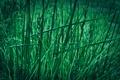 Картинка зелень, трава, макро, природа, green, grass, macro
