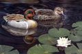 Картинка озеро, утки, лотос, пара, живопись, Harold Roe, чирок