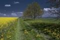 Картинка пейзаж, поле, дорога, лето