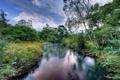 Картинка лес, лето, пейзаж, река