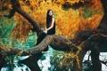Картинка осень, листья, девушка, река, дерево, Diane