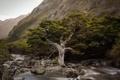 Картинка New Zealand, Fiordland, Bonsai, Hollyford River