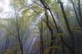 Картинка лес, лето, свет, деревья