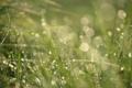 Картинка трава, капли, макро, роса