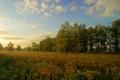 Картинка поле, небо, облака, деревья, цветы, туман, восход