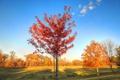 Картинка осень, небо, трава, листья, деревья, парк, стол