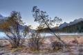 Картинка деревья, пейзаж, природа