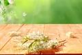 Картинка цветы, природа, весна, лепестки, боке