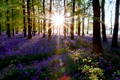 Картинка природа, лес, свет, солнце