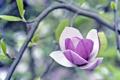Картинка зелень, цветок, фиолетовый, листья, макро, ветки, природа