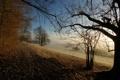 Картинка осень, ветки, природа, листва