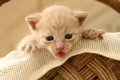 Картинка кот, корзина, котенок, cat, маленький, кошка