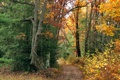 Картинка дорога, осень, лес, листья, деревья, тропинка