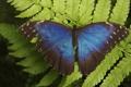 Картинка листья, бабочка, крылья, лист